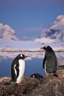 Pinguïns in een winterlandschap