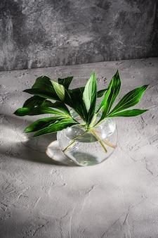 Pioen groene bladeren in de vaas van het glasgebied met water op geweven steenachtergrond, hoekmening