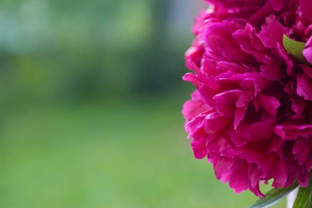 Pioenbloemen op groene aardachtergrond