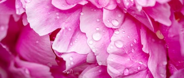 Pioenen met waterdruppels close-up