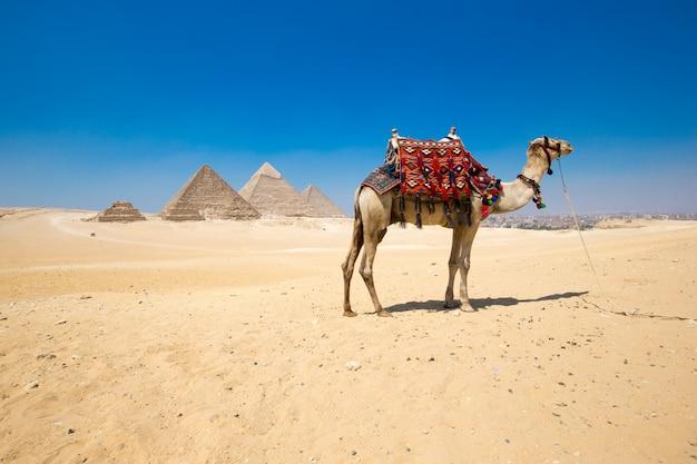 Piramides met een prachtige hemel van gizeh in caïro, egypte.
