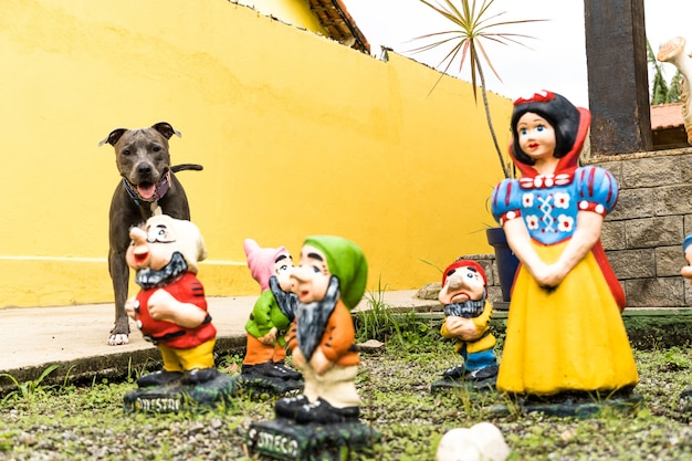Pitbull hond in de achtertuin van het huis. pitbull blauwe neus met honingkleurige ogen. huis met gele muur en tuin.