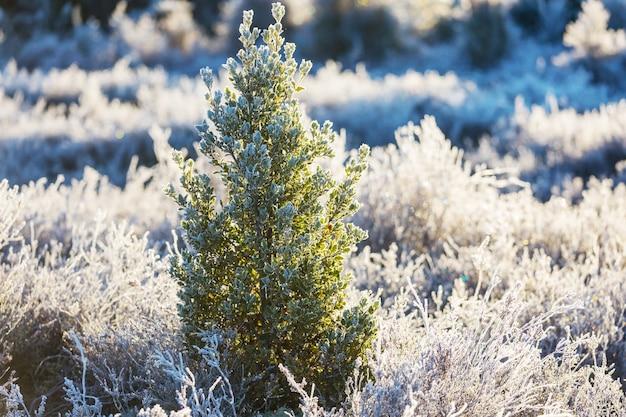 Pittoresk besneeuwd bos in de winter
