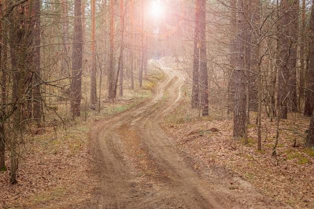Pittoresk dennenbos met een kronkelende landweg