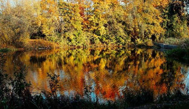 Pittoresk kleurenbos wordt weerspiegeld in het meer in het herfstpark op een zonnige dag. kleurrijke gebladerte boomreflecties in kalm vijverwater op een mooie herfstdag