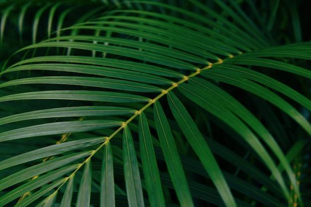 Plam laat natuurlijk groen blad mooi in de jungle van tropische bosplanten