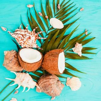 Plant bladeren en kokosnoten in de buurt van schelpen