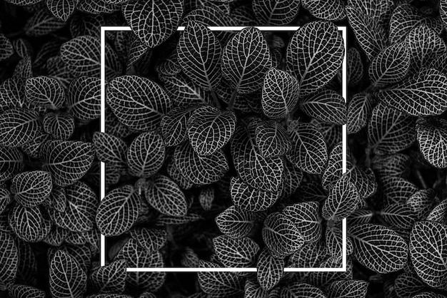 Plant creatieve foto voor elke lay-out conceptfoto