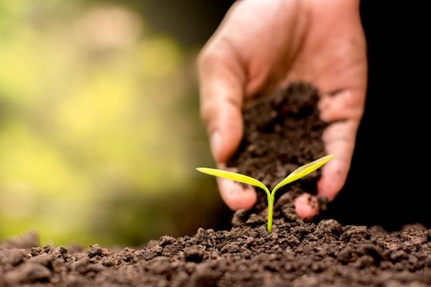 Plant een boom.