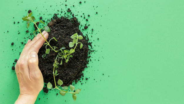 Plant en bodem op groene achtergrond met kopie ruimte