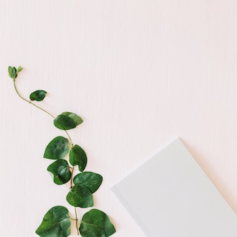 Plant en papier