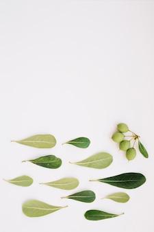 Plant fruit in de buurt van bladeren