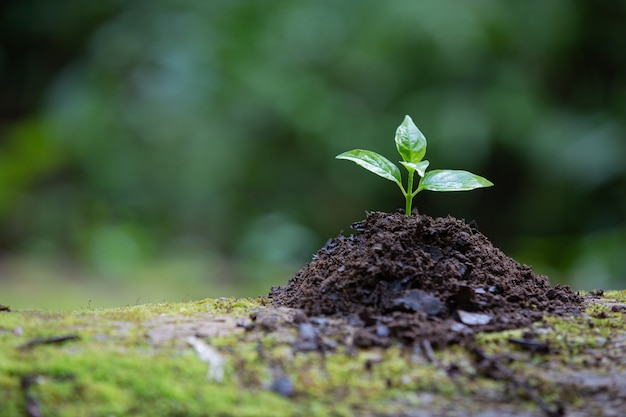 Plant groeit in de grond