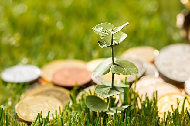 Plant groeit in munten glazen pot voor geld op groen gras
