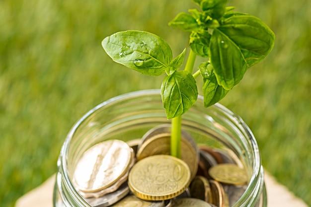 Plant groeit in munten glazen pot