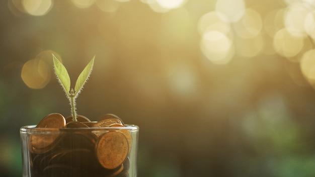 Plant groeit in spaarmunten
