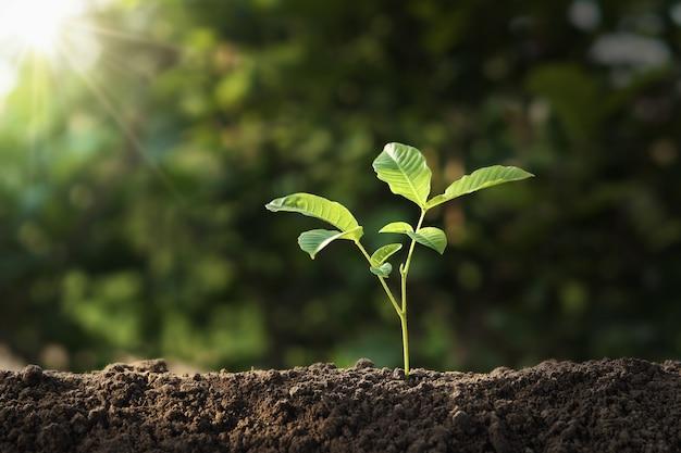 Plant groeit op de bodem met zonneschijn. eco aarde dag concept