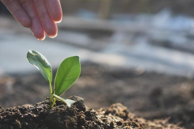 Plant groeit op de grond