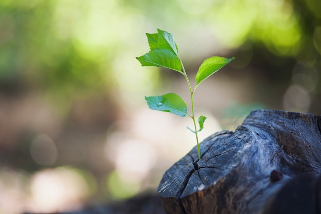 Plant groeit uit een boom