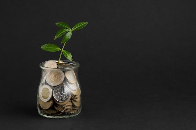 Plant groeit uit pot met munten