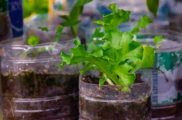 Plant groenten in gebruikte flessen water op tafel. recycle gebruikte materialen