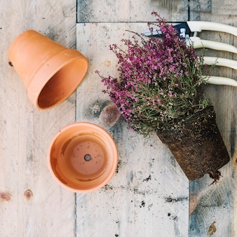 Plant in de buurt van lege potten en gereedschappen