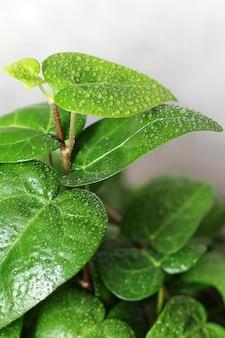 Plant in de druppels