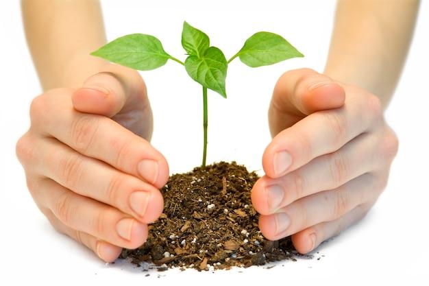 Plant in een hand geïsoleerd op een witte achtergrond