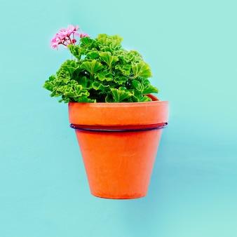 Plant in een pot. geranium. minimale stijl