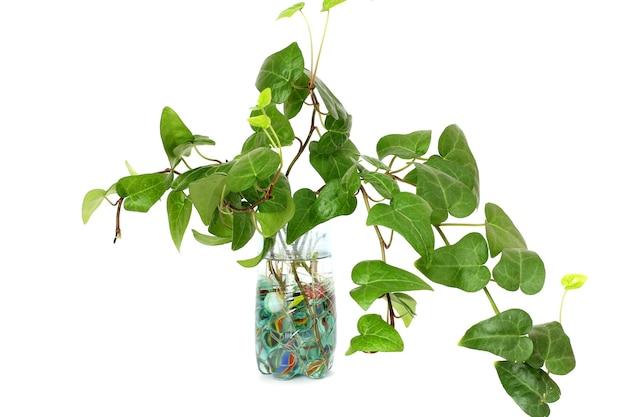 Plant in een vaas geïsoleerd op wit.