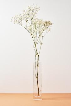 Plant in glazen vaas op pastel beige achtergrond minimale stijl decor
