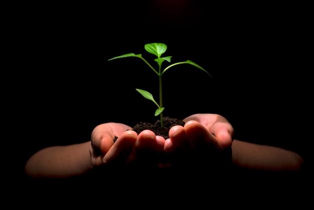 Plant in handen