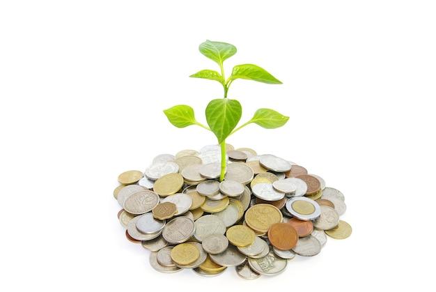 Plant in munten geïsoleerd