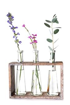 Plant in reageerbuis