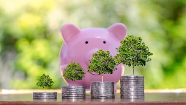 Plant jonge boom groeit op een stapel munten, geldbesparend concept. economische groei en financiering voor duurzame ontwikkeling
