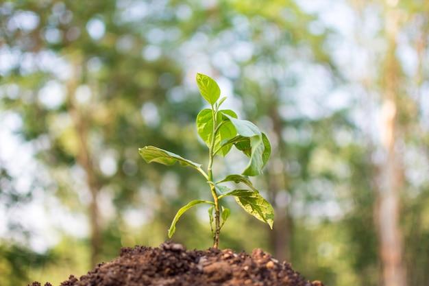 Plant met bokeh en natuur achtergrond, red de wereld en wereld milieu dag bij zonnig weer