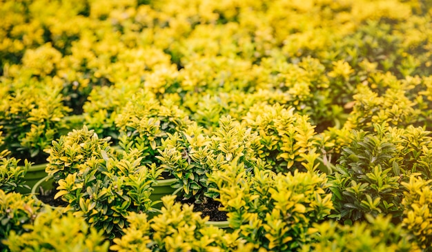 Plant met gele bladeren op groene potplant