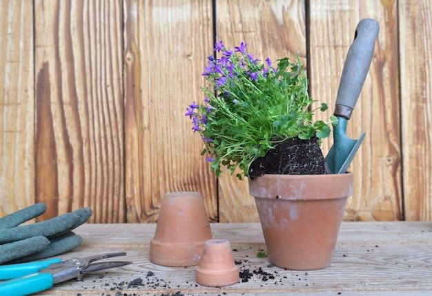 Plant met zijn kluit voor oppotten met tuingereedschap op houten tafel