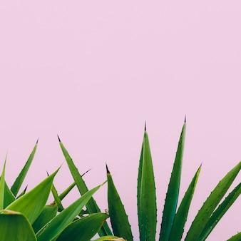 Plant o roze. buitenshuis. minimaal ontwerp. mode voor prints