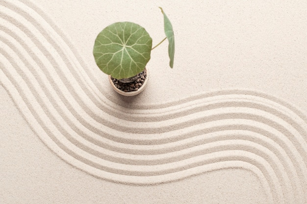 Plant op de strandzandachtergrond in gezondheids- en welzijnsconcept