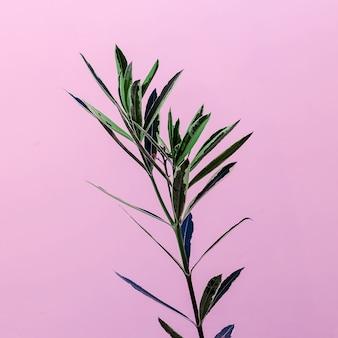 Plant op een roze minimalistisch design mode