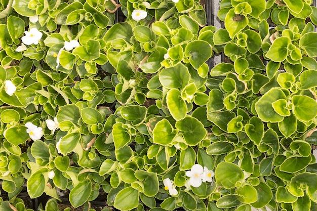Plant potten en bloemenpotten in een grote markttuin