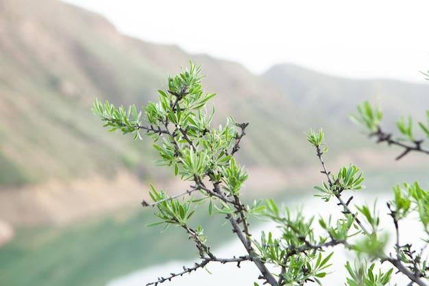Plant 's avonds aan de rand van de klif
