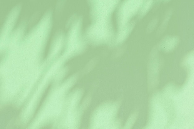Plant schaduw op een groene achtergrond