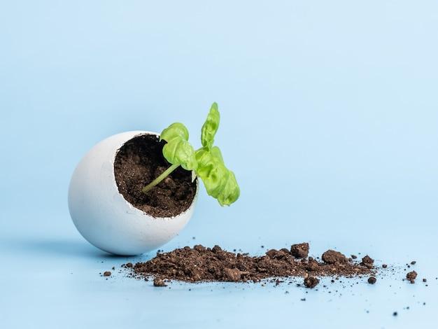 Plant spruit in eierschaal op een blauwe achtergrond. ecologisch biologisch product, plantenteelt.