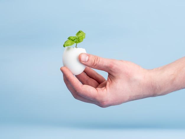 Plant spruit in eierschaal op een blauwe achtergrond in iemands hand. ecologisch biologisch product, plantenteelt.