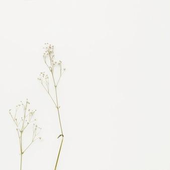 Plant takken met kleine bloemen