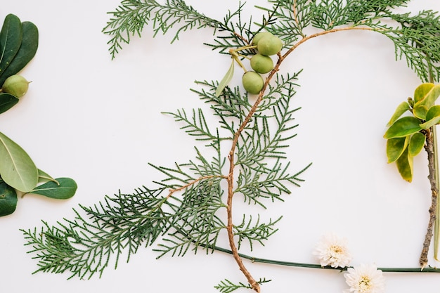 Plant twijg samenstelling