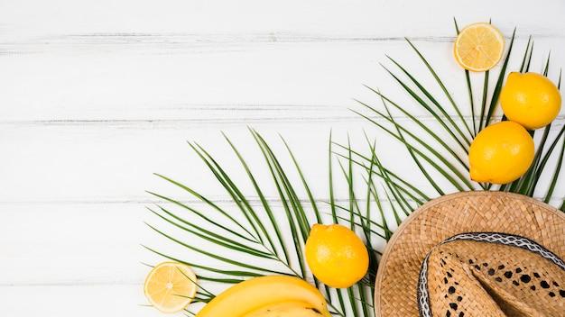 Plant verlaat dichtbij citrusvruchten en hoed