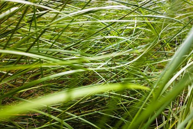 Plantaardige achtergrond van dunne gematteerde groene bladeren